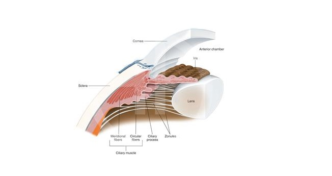 Anterior segment manual BEGINNERS Ophthalmology attachment.php?attachmentid=3227&d=1500061999