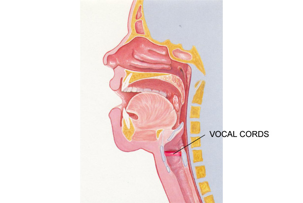 Vocal cord Bacterial infection photos attachment.php?s=0c2791b902bb9bf1f0264ed9d501af00&attachmentid=1842&d=1441385447